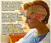 Профессиональная лечебно-диагностическая IT-система восстановительной медицины/Эксклюзив Санкт-Петербург