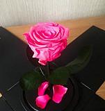 Роза в колбе с подарочной упаковкой Омск
