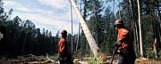 Бригады для вырубки леса Рославль