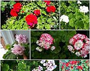 Комнатные цветы, обмен Чебоксары