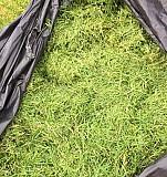 Свежая газонная трава Покос каждые 1-2 недели Смоленск