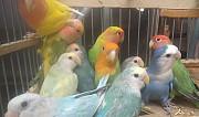 Попугаи разных пород Краснодар