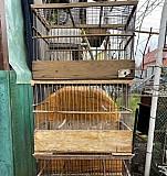 Клетки для птиц Тула