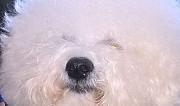 Собака Мурманск