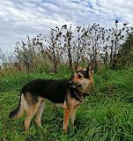 Собака Тверь