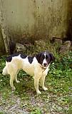 Собака в дар Сочи
