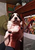 5 щенков ищут дом Тула