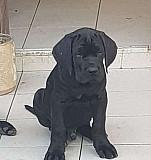 Собака Сочи