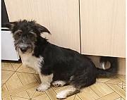 Собачка небольшого размера Краснодар