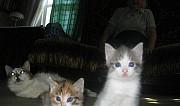 Кошечка и котик в добрые руки Тула