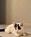 Котенок мальчик 2 месяца Рязань