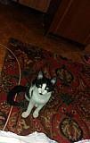 Отдам котёнка в добрые руки кушает всё, к лотку пр Тула
