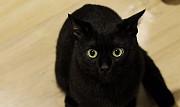 Чёрный котик Екатеринбург