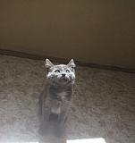 Кошка 5 месяцев Тольятти