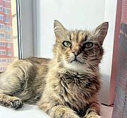 Кошечка - кучеряшечка Рязань