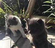 Котята Рязань