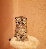 Котик ждёт новый дом, кушает все, к лотку приучен Рязань
