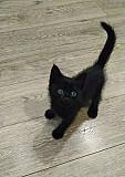 Котенок в добрые руки Тула