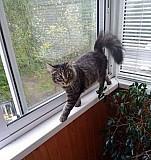 Котенок Рязань