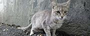 Милые котики в добрые руки Челябинск
