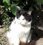 Бело-черный котик Екатеринбург
