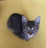 Котёнок Рязань