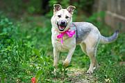 Милая, во всех отношениях, собака Жасмин в добрые руки Москва