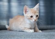 Красивые домашние котята в добрые руки Москва
