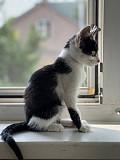 Маленький котенок Малыш в добрые руки Москва