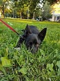 Веселая и активная щенок-девочка Тучка в добрые руки Москва